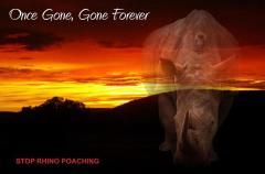 Gone rhino