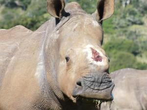 Thandi recovered.