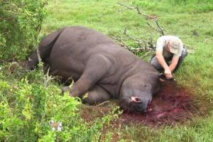 Thandi found poached.