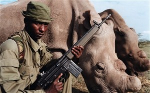 armed guard rhinos