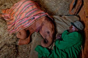 Mahouts sleep with the orphans every night.
