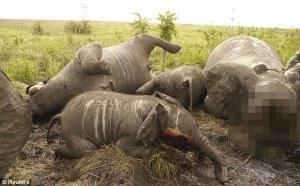 Slaughtered elephant family
