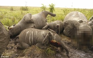 Slaughtered elephant family