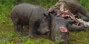 Rhino mom n baby