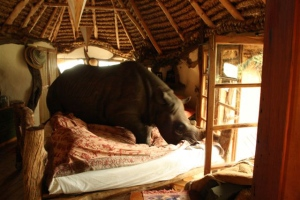 There's a rhino in the bed!