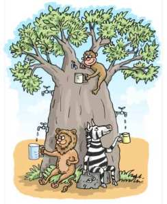 baobab cartoon