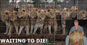 troph hunt lions