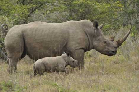 rhino mom n babe