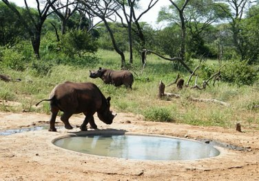 bebrave water hole