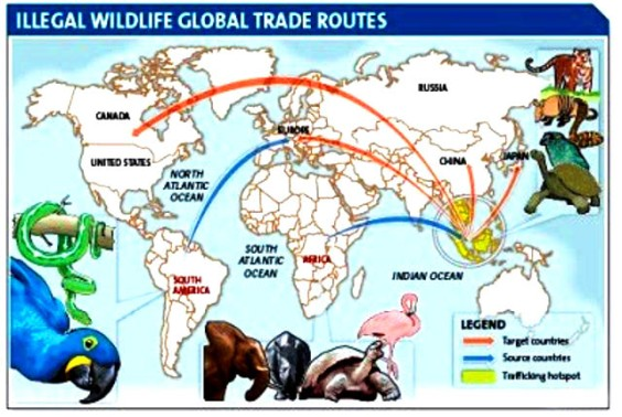 illegal trade routes