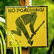 no poaching