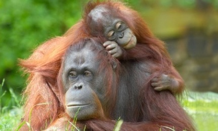 orang mom and baby
