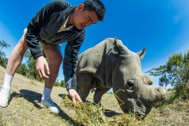 Yao Ming with one of the four remaining Northern White Rhino at Ol Pejeta Conservancy.