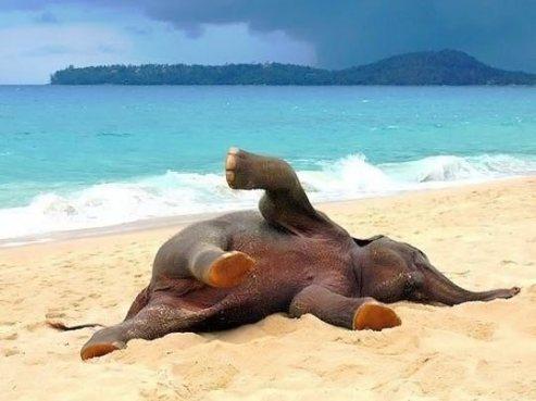 baby ele on beach