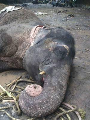 Bijlee collapsed