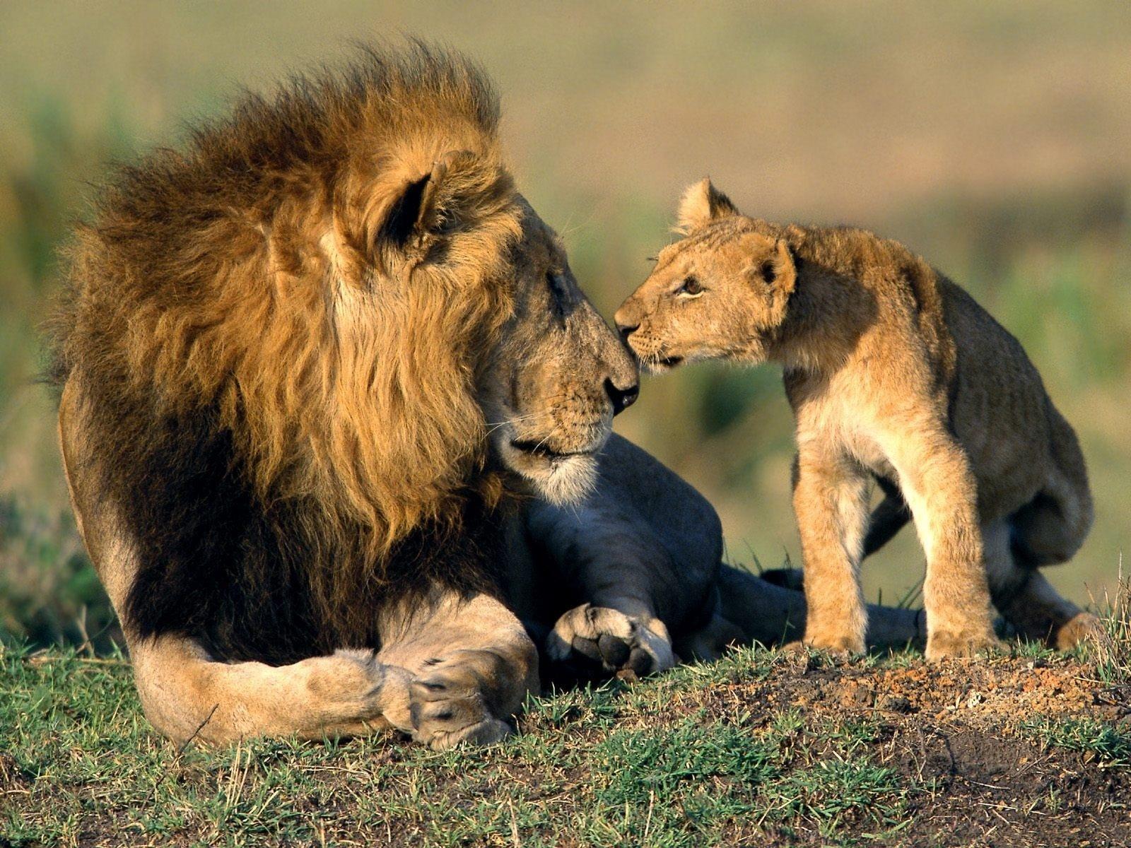 dad-lion.jpg