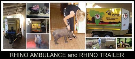 rhino amb