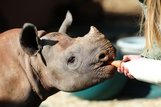 rhino with bottle