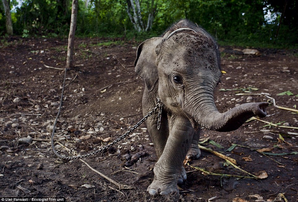 palm oil | Fight for Rhinos