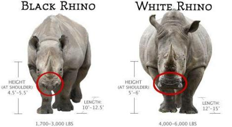 black and white rhino diff
