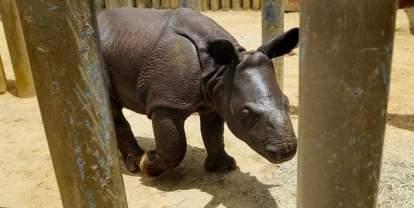 montom zoo baby 2