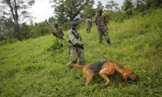 Park Rangers in Virunga National Park in easter Congo on patrol , protecting park from rebel group.