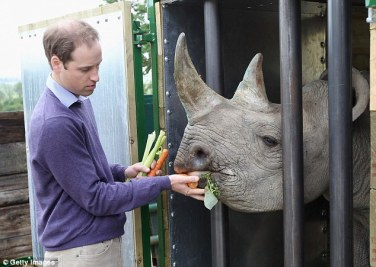 prince william with rhino