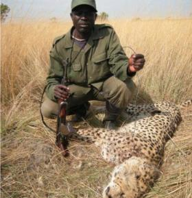 Park Ranger in Zambia finds snared cheetah.