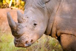 white rhino ffr
