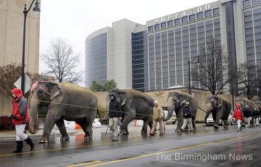 elephant circus modern