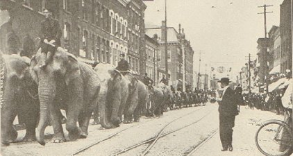 Circus elephants in the 1800s.