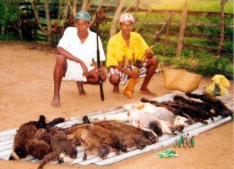 endangered lemurs killed for bush in mada