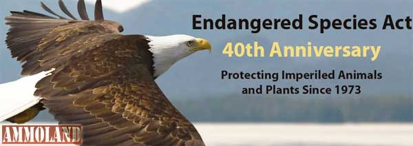 the need to preserve americas endangered species In america endangered ark foundation formed between animals and humans, and the need for human involvement and action to save endangered animals.