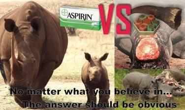 obvious rhino
