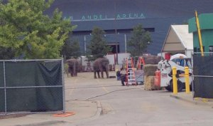 elephants at van andel