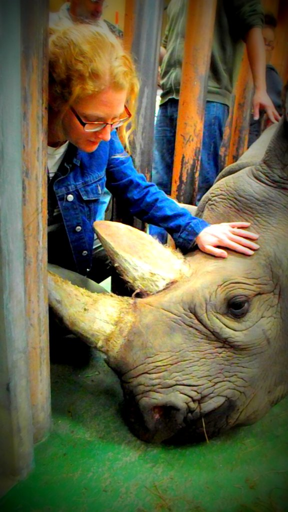 Visiting Dopsee the Rhino