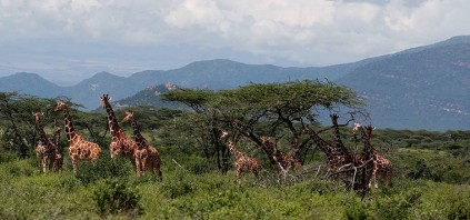 Samburu National Reserve,