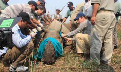 Tracking Rhino