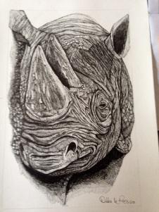 Debbie le roux rhino drawing