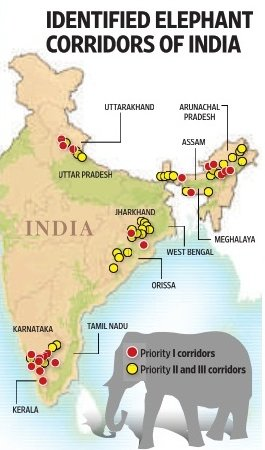 a look at the extent of the problem of elephant poaching in india The problem the elephant in india map showing the approximate locations and extent and was at an all-time high in the late 1990s when poaching.
