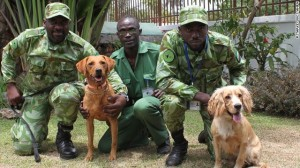 Gabon's tracking team works for a tennis ball.