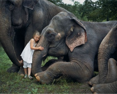 girl with elephants by robin schwartz