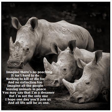 Image result for goodbye sudan the white rhino cartoon