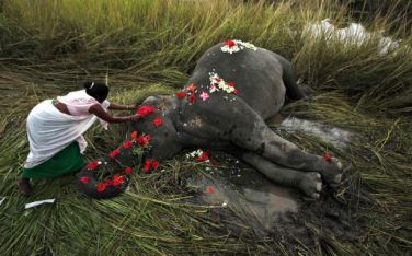India villager pays respects to elephant