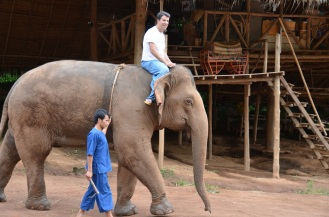 elephant training