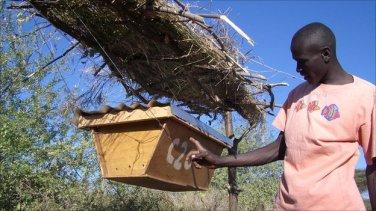 beehives near elephants
