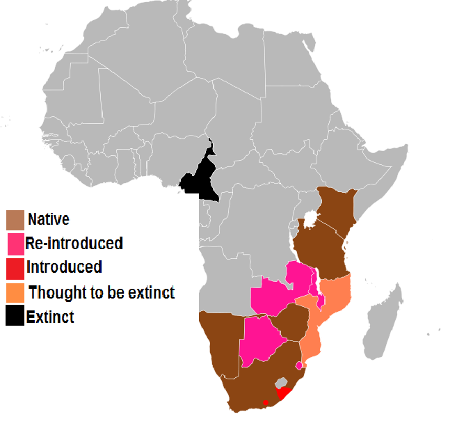 heterozygosity within white and black rhino Black rhinoceros diceros bicornis  black rhinoceros and cites current status within cites  management of both black and white rhinos in africa the programme is .
