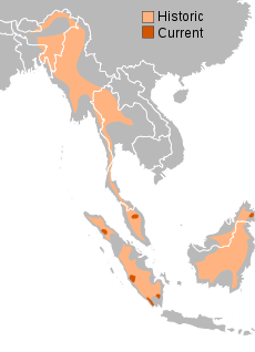 sumatran range history and current