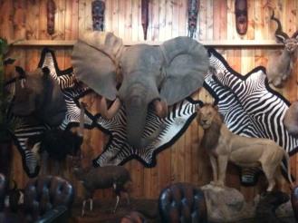 animal trophies