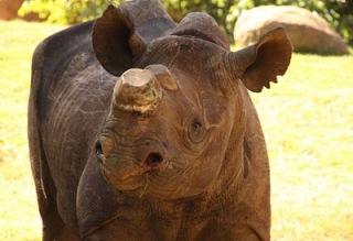 Phila at zoo in jo-burg
